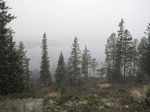 bosque-noruega.jpg