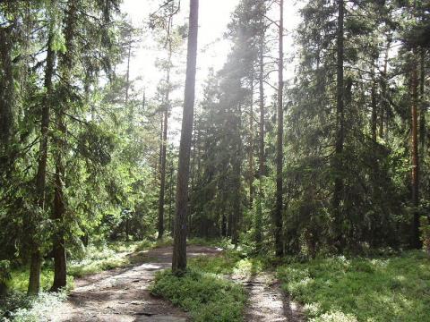 bosque-noruego.jpg